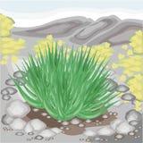 La planta de Vera del áloe crece en naturaleza La curación es ampliamente utilizada en medicina Agradable y modesto Ramitas verde stock de ilustración