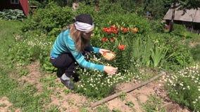 La planta embarazada de la hierba de la manzanilla del frunce de la muchacha de los jóvenes florece metrajes