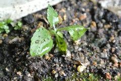 La planta en el suelo imagen de archivo libre de regalías
