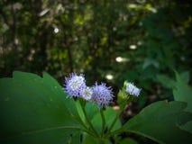 La planta en naturaleza Fotos de archivo