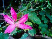 La planta en naturaleza Fotografía de archivo