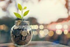 La planta en pila acuña en la botella, el concepto cada vez mayor del dinero y el éxito de la meta foto de archivo
