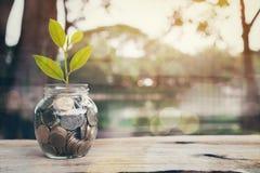 La planta en pila acuña en la botella y el gráfico financieros, concepto cada vez mayor del dinero foto de archivo libre de regalías