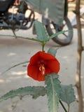 La planta es nuestra vida salvo esto y árboles imagen de archivo libre de regalías