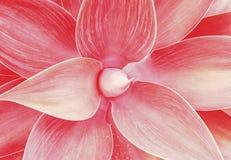 La planta floral del agavo sale del modelo foto de archivo libre de regalías