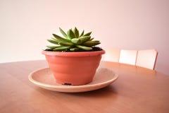 La planta hermosa parece un loto Planta en conserva sobre una tabla Imagenes de archivo