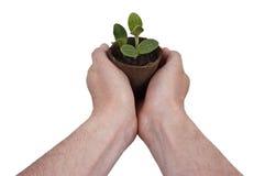 La planta, plantando, jardín, cultivando un huerto crece creciente Fotografía de archivo libre de regalías