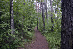 La planta que camina el paseo al aire libre hojea el gree de madera de la naturaleza del árbol de la trayectoria de bosque del ca Imagen de archivo libre de regalías