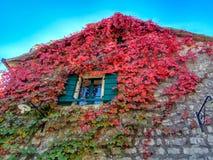 La planta que sube con rojo se va en otoño en la pared de piedra vieja imagen de archivo libre de regalías