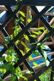 La planta que sube, enredadera, la planta enrolla su manera a través de la red Imagen de archivo libre de regalías