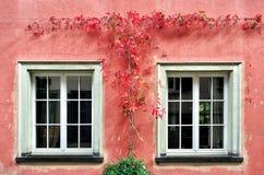La planta roja de la enredadera en la pared Imagenes de archivo