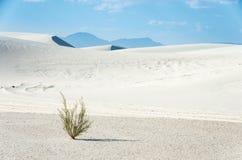 La planta solitaria en la arena blanca imagen de archivo