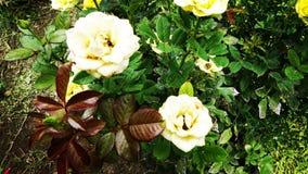 La planta subió Fotos de archivo