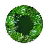 La planta tropical hojea forma del círculo con el centro verde vacío en el fondo blanco fotografía de archivo libre de regalías
