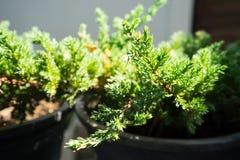 La planta verde Fotografía de archivo