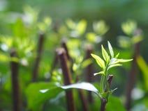La planta verde deja la profundidad del campo baja bajo luz del sol brillante Fotografía de archivo