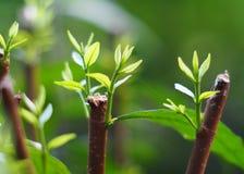 La planta verde deja la profundidad del campo baja bajo luz del sol brillante Foto de archivo