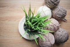 La planta verde en el pote, el hilado de las agujas que hace punto, beige y blanco están en la tabla fotografía de archivo