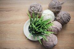 La planta verde en el pote, el hilado de las agujas que hace punto, beige y blanco están en la tabla imagen de archivo libre de regalías