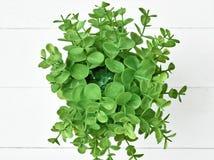 La planta verde en pote Foto de archivo libre de regalías