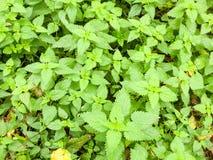 la planta verde hermosa remata follaje ofende malas hierbas fuera del na salvaje foto de archivo
