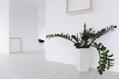 La planta verde puede calentar cada espacio Fotografía de archivo libre de regalías