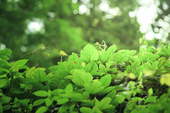 La planta verde separa sus hojas en la pared Foto de archivo