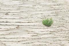 La planta verde sobrevivida Fotos de archivo