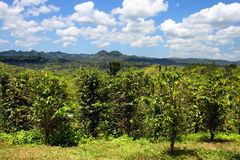 La plantación de Croydon es una plantación de trabajo acurrucada en las colinas de las montañas de Catadupa cerca de Montego Bay, foto de archivo libre de regalías