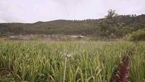 La plantación de flores se riega con agua automática Vietnam metrajes
