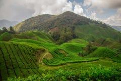 La plantación de té en las colinas verdes en el valle llenó de la luz y de las montañas en fondo debajo del cielo escénico foto de archivo libre de regalías