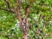 La plantación verde con el sol irradia el modelo Foto de archivo