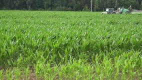 La plantación y el tractor del maíz del maíz rocían cultivos en campo con las sustancias químicas 4K almacen de video