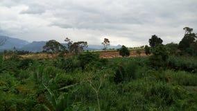 La plantation Photographie stock libre de droits