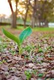 La plante verte et les feuilles tombent, fond d'automne Photographie stock libre de droits