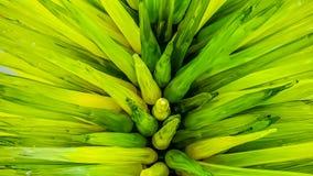 La plante verte a inspiré l'illustration en verre photo libre de droits