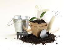 La plante verte se développe de la terre avec des outils de jardin Photo libre de droits