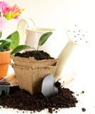 La plante verte se développe de la terre avec des outils de jardin Image libre de droits