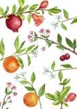 La plantilla con el árbol frutal ramifica, las hojas, las flores y las bayas Foto de archivo
