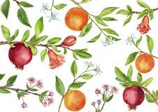 La plantilla con el árbol frutal ramifica, las hojas, las flores y las bayas Fotos de archivo