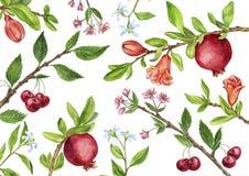 La plantilla con el árbol frutal ramifica, las hojas, las flores y las bayas Imágenes de archivo libres de regalías