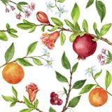 La plantilla con el árbol frutal ramifica, las hojas, las flores y las bayas Fotografía de archivo