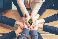 La plantula di Team Work Cupping di affari delle mani consolida ambientale e riduce la terra di riscaldamento globale immagini stock libere da diritti