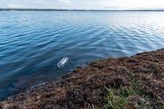 La plastica imbottiglia l'acqua, all'acqua, il bordo di un lago, galleggiante via, fine su fotografie stock