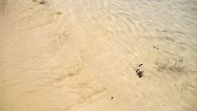 La playa agita el steadicam metrajes