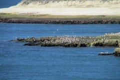 La playa con los pájaros en una bahía de Océano Atlántico Imágenes de archivo libres de regalías