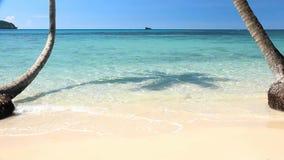 La playa de la arena con la palmera