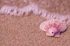 la playa de la cáscara se relaja Fotos de archivo libres de regalías