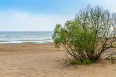 La playa del mar Báltico en Repino cerca de St Petersburg Imagen de archivo libre de regalías