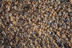 La playa se cubre con las cáscaras multicoloras de crustáceos Fotos de archivo